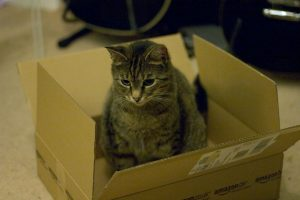 Amazon box with a cat
