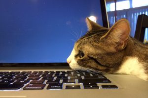 Cat lying on a MacBook laptop