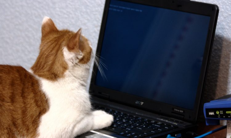 Cat at laptop with router